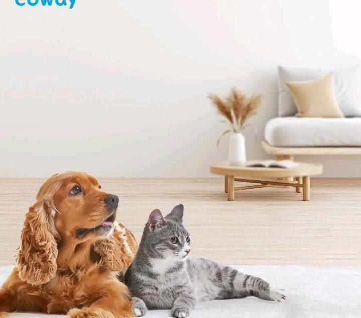 Kamu punya anabul kesayangan di rumah? Air purifier jadi 'must have' item kamu nih, biar melindungim...